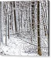 Snow Covered Forest 4 Acrylic Print