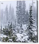 Snow Covered Mountain Ash Acrylic Print