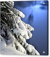Snow Covered Tree Branches Acrylic Print