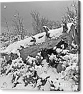 Snow Covered Tree Log In Black And White Acrylic Print
