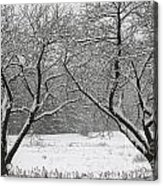 Snow Covered Trees In A Field. Acrylic Print