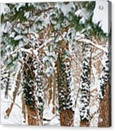 Snow Covered Trees Acrylic Print