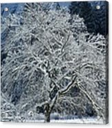 Snow Covered Winter Acrylic Print
