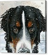 Snow Day Acrylic Print