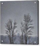 Snow Falling On Bare Trees Acrylic Print