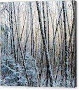 Snow Falls On The Alders  Astoria Acrylic Print
