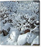 Snow Frosted Bush Acrylic Print