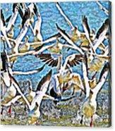 Snow Geese Panic Acrylic Print
