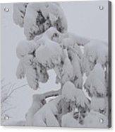 Snow Goon Acrylic Print