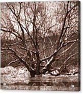 Snow Imp 1 - Tree Covered With Snow January 2014 Acrylic Print