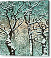 Snow In Forest Acrylic Print