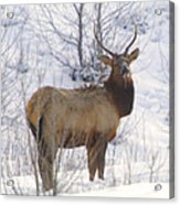 Snow In The Face  Acrylic Print
