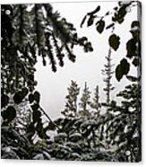 Snow In Trees At Narada Falls II Acrylic Print