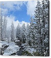 Snow In Yellowstone Acrylic Print by Diane Mitchell