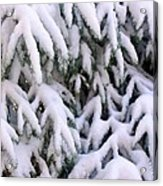 Snow Laden Branches Acrylic Print