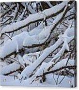 Snow Laden Acrylic Print