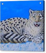 Snow Leopard Acrylic Print by David Hawkes