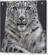 Snow Leopard Acrylic Print