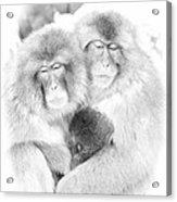 Snow Monkey Character Study Vi Acrylic Print