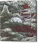 Snow On A Pine Tree With A Red Barn. Acrylic Print
