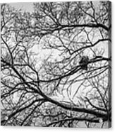 Snow On Bare Branches Acrylic Print
