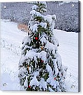Snow On Christmas Tree Acrylic Print