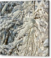 Snow On Ice Acrylic Print