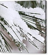 Snow On Pine Needles Acrylic Print