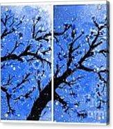 Snow On The Blue Cherry Blossom Tree Acrylic Print