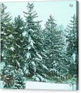 Snow On The Evergreens Acrylic Print