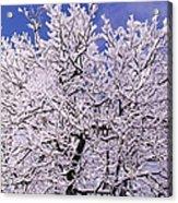 Snow On Tree Acrylic Print