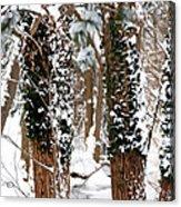 Snow On Tress 2 Acrylic Print