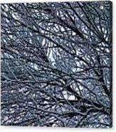 Snow On Twigs Acrylic Print