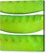 Snow Peas Acrylic Print
