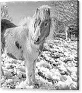 Snow Ponies Acrylic Print