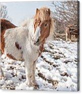 Snow Ponies - Colour Acrylic Print