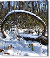 Snow Portal A Fallen Vine Forms An Oval Shape Covered In Snow. Acrylic Print