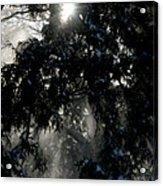 Snow Rays Acrylic Print