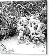 Snow Scene 1 Acrylic Print by Patrick J Murphy