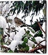 Snow Scene Of Little Bird Perched Acrylic Print