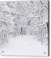 Snow Scene Tree Branches Acrylic Print