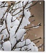 Snow Shower Acrylic Print