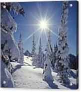 1m4882-snow Laden Tree Sunburst Acrylic Print