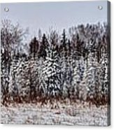 Snow Tree Line Acrylic Print by Gary Gish