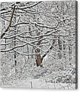 Snow White Forest Acrylic Print