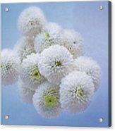 Snowballs-pom Mum Acrylic Print