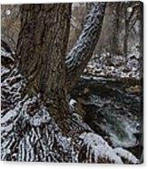 Snowbark Acrylic Print