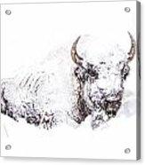 Snowed-in Acrylic Print
