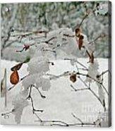 Snowed Under Acrylic Print