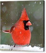 Snowflake Cardinal Acrylic Print